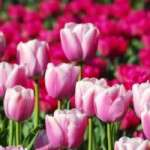 Inicio astronómico de la primavera de 2014: jueves 20 de marzo
