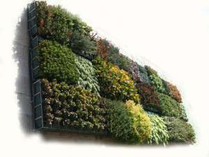 jardi-vertical-jbuchgirona-4