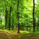 """shinrin-yoku, cuya traducción literal sería """"tomar la atmósfera al bosque"""" o """"baño de bosque"""""""