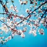 Esta primavera 2016 dará comienzo el 20 de marzo a las 4:30