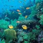Día Mundial de los Océanos  8 de junio
