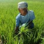 Día Internacional de las Mujeres Rurales 15 de octubre