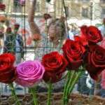 Festivitat de la Mare de Déu del Roser (7 ´d´octubre)