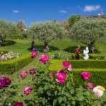 El 17è Concurs Internacional de Roses Noves tindrà lloc del 12 al 14 de maig al Roserar del Parc de Cervantes.