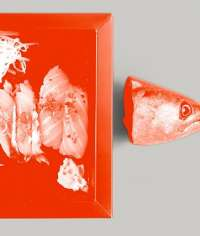 Body_sushi_1424x427.1