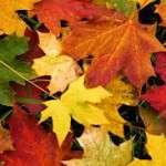 El equinoccio de otoño 2017 se producirá el viernes 22 de septiembre a las 20.02 horas GMT (22.02 h en la España peninsular).